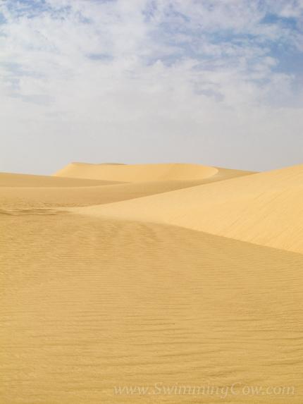 sahara race 250km-114