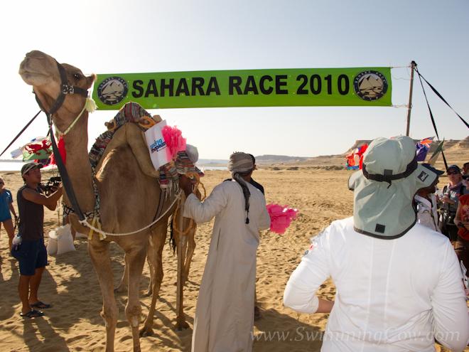 sahara race 250km-77
