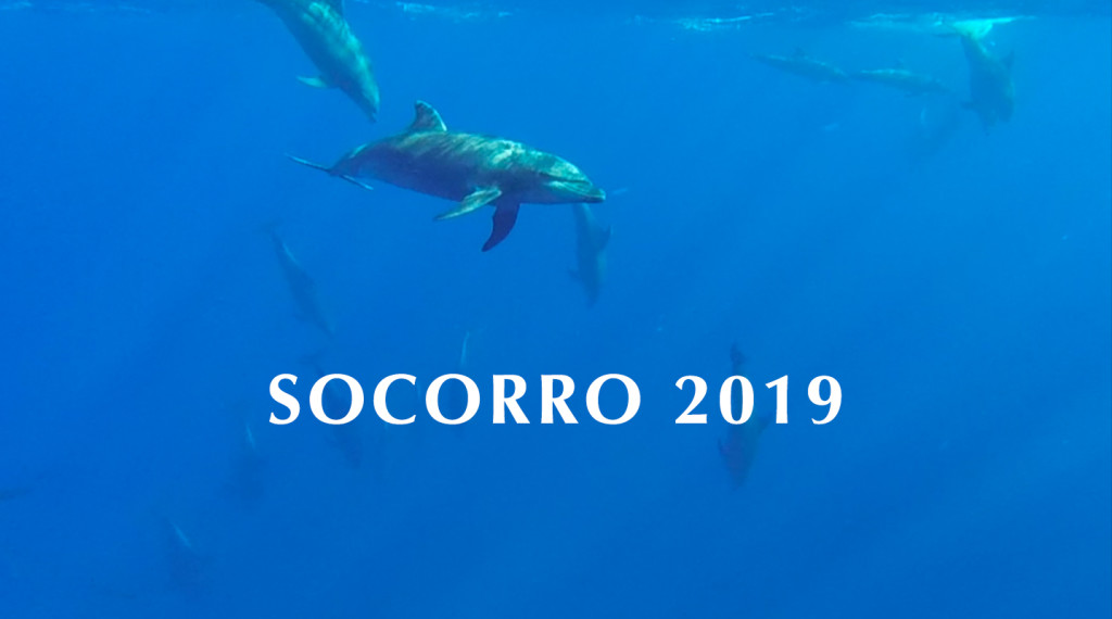 Diving the Legendary Socorro Islands