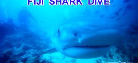 Fiji: Diving with Tiger Sharks & Bull Sharks